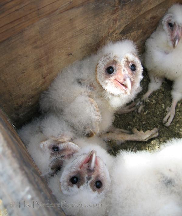 10,000 Birds Cavity Nesting Birds of North America and ...