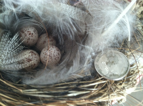 Barn Swallow Nest with Eggs