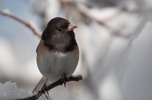 The 113th Audubon Annual Christmas Bird Count Begins December 14th