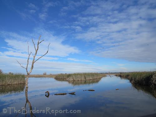 Birds of Delevan National Wildlife Refuge