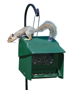 Super Stop-A-Squirrel