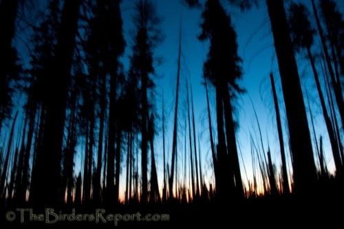 Lassen Volcanic National Park, national parks, pine trees