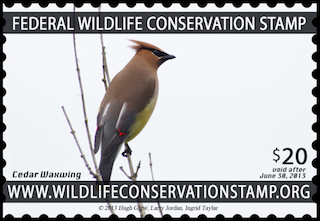 Wildlife Conservation Stamp Cedar Waxwing