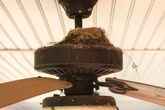 Eastern Phoebe Nest