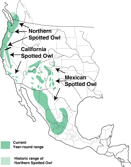 The Northern Spotted Owl: One of the Most Studied Owls in ...